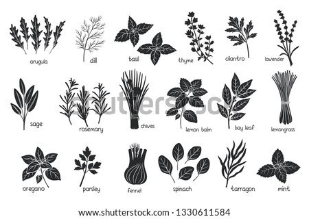 Black herbs spices silhouettes. Popular culinary herbs, stamp print vector illustration. Bay leaf, lemongrass, fennel, dill, cilantro and chives. Thyme, lemon balm, tarragon etc. Seasoning food design #1330611584