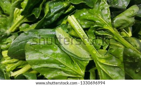 Close up view of lush green leaves of spinach vegetables. Vegetable background for text and advertisements. #1330696994