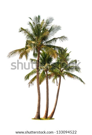 Three coconut palm trees isolated on white background Royalty-Free Stock Photo #133094522