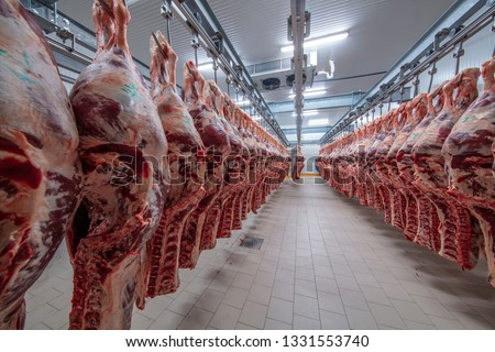 Meat industry,meats hanging in the cold store. Cattles cut and hanged on hook in a slaughterhouse. Halal cutting. #1331553740