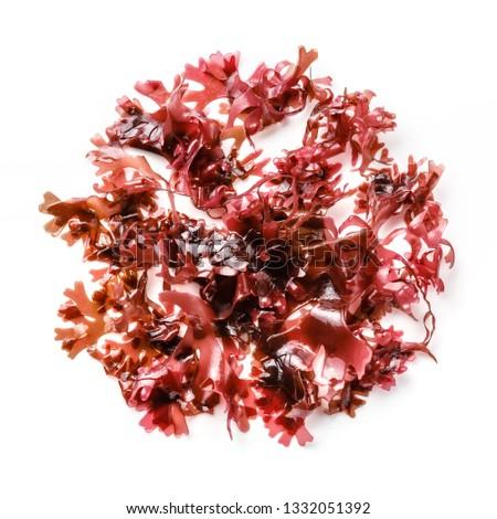 Edible Tohsaka red Seaweed salad on white background #1332051392