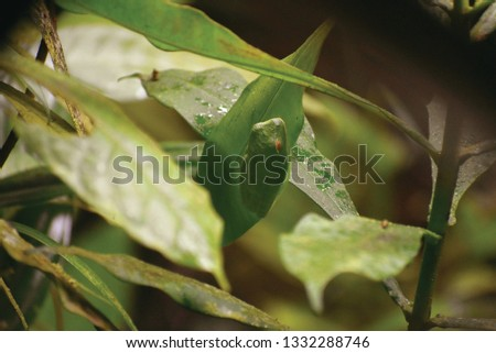 Green frog eggs and green frog in the rain forest. #1332288746