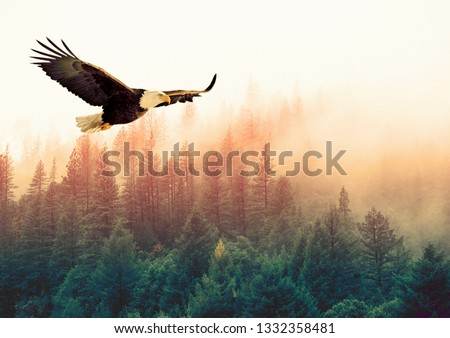 Animals / Wildlife - Big american bald eagle flying (left to right). It is isolated on a background with a mountain and green trees from forest. Sunset. Freedom concept. Alaska (Kenai Mountains) #1332358481