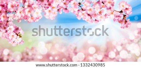 Pink cherry blossoms in spring with bokeh background #1332430985