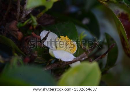 pollen tea flower #1332664637