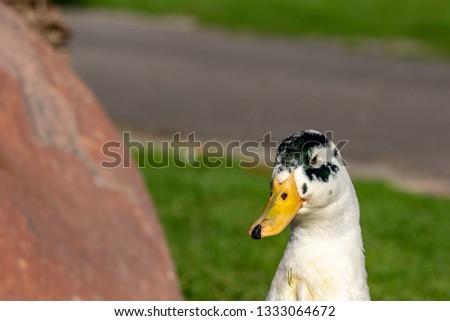 Close up portrait of colorful duck head #1333064672
