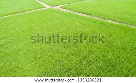Aerial view of farmlands. Vintage tone. Bright and vivid green. Spring farmland. Taiwan farmland. #1333286321