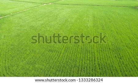 Aerial view of farmlands. Vintage tone. Bright and vivid green. Spring farmland. Taiwan farmland. #1333286324