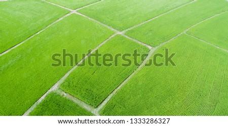 Aerial view of farmlands. Vintage tone. Bright and vivid green. Spring farmland. Taiwan farmland. #1333286327