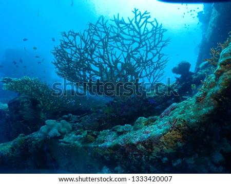 Scuba diving in PNG . Best dive sites in Rabaul . Wreck diving in Rabaul #1333420007
