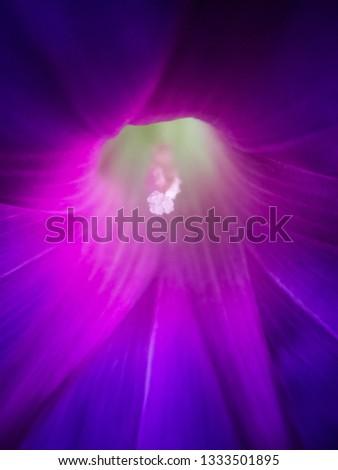 flowers in a garden #1333501895