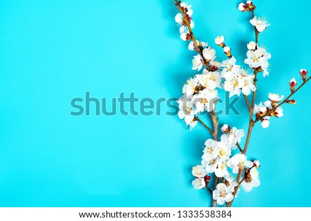 Sprigs of the apricot tree with flowers on blue background. Place for text. The concept of spring came, happy easter, mother's day. Top view. Flat lay. Copy space. #1333538384