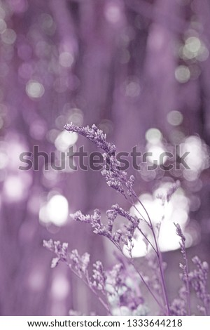 Blurred Grass Flowers with Bokeh background - Violet pastel Color Patterns  #1333644218