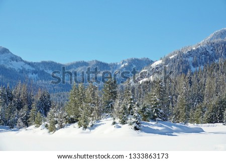 Snowy evergreen trees on island in frozen snow covered alpine lake. Pretty Cascade Mountain background under clear blue sky on nice day following heavy snowfall. Mount Baker Snoqualmie National Forest #1333863173