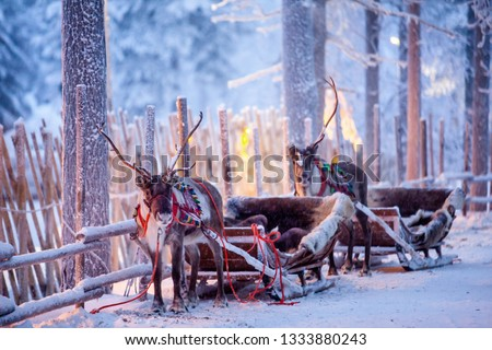 Reindeer with sledge in winter forest in Rovaniemi, Lapland, Finland #1333880243