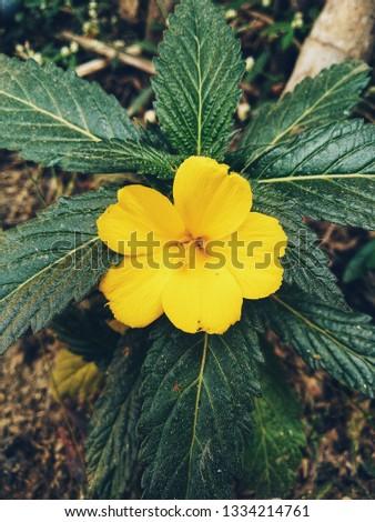 Beautiful yellow flower  #1334214761