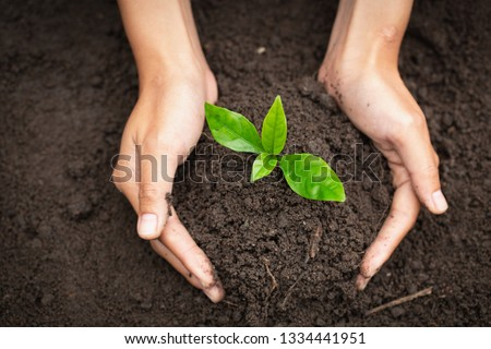 Hand protects seedlings that are growing, Environment Earth Day In the hands of trees growing seedlings, reduce global warming, concept of love the world.  #1334441951