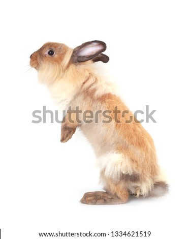 Brown little rabbit, adorable young bunny on white backround #1334621519
