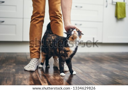 Domestic life with pet. Cat welcome his owner (young man) at home.  #1334629826
