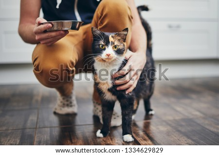 Domestic life with pet. Man holding bowl with feeding for his cat. #1334629829