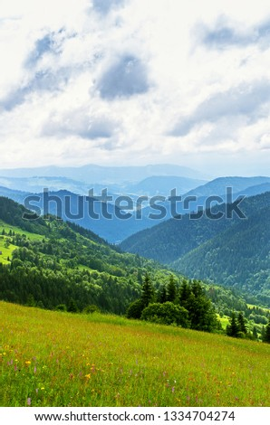 meadow in the mountains, slopes, growing trees in summer #1334704274