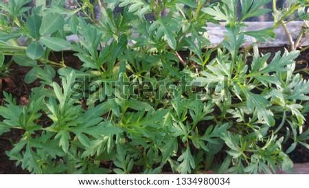 a small flower garden #1334980034