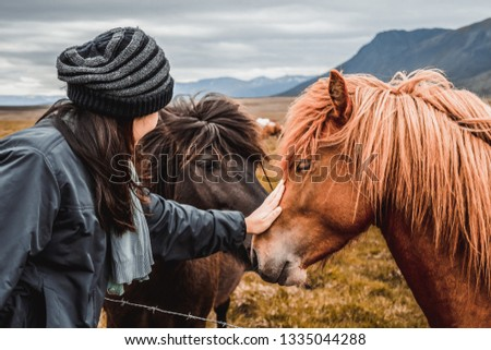 Icelandic horse in the field of scenic nature landscape of Iceland. The Icelandic horse is a breed of horse locally developed in Iceland as Icelandic law prevents horses from being imported. #1335044288
