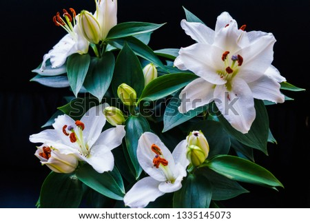 Bouquet of white lilies. Beautiful white lilies. #1335145073