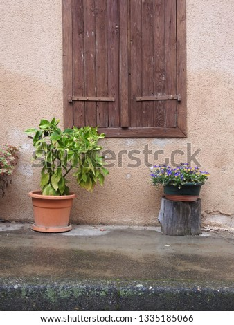 Pair of plants on street pavement. Green plant in orange pot and purple flowers in box on tree trunk stand against rustic background of rough beige-cream wall and window frame with wooden shutters #1335185066