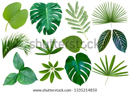 collection various of green leaves pattern for nature concept,set of tropical leaf isolated on white background   #1335214850