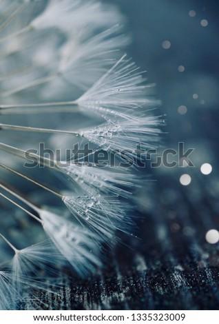 dandelion flower plant #1335323009
