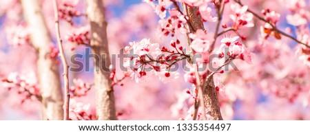 Sakura Cherry Blossom Flower #1335354497
