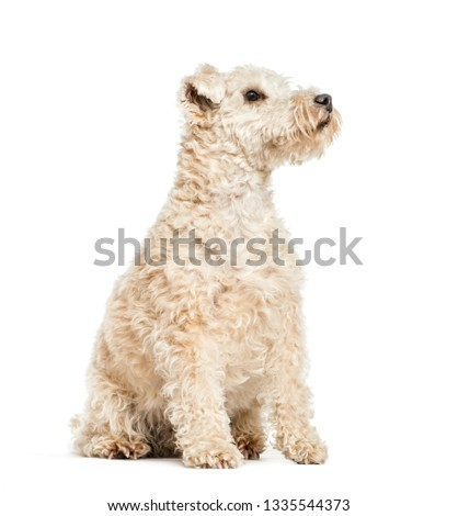 Lakeland Terrier, 6 years old, sitting in front of white background #1335544373