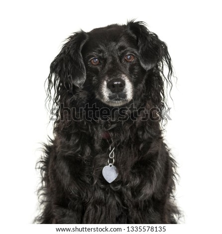 Mixed-breed dog in front of white background #1335578135