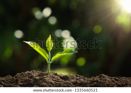 young plant growing in nature and morning light. concept earth day #1335660521