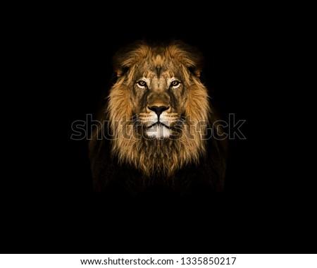 Lion head on black  wallpaper  #1335850217