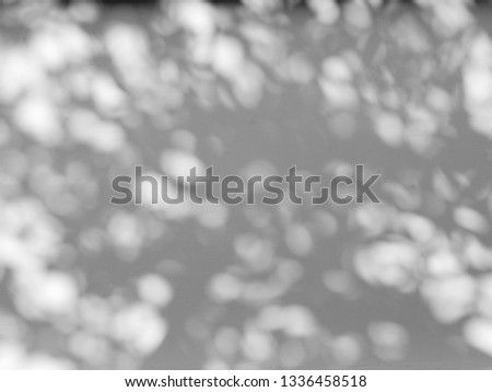 abstract shadow of the leaves on a white wall #1336458518