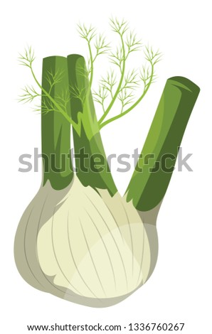 Cartoon fennel vector illustration of vegetables on white background. Royalty-Free Stock Photo #1336760267