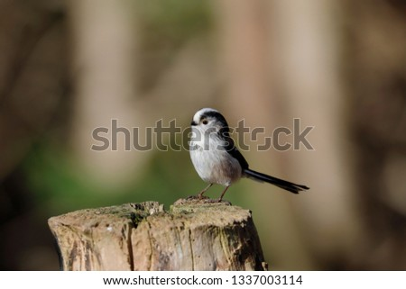 A long-tailed tit on a post #1337003114