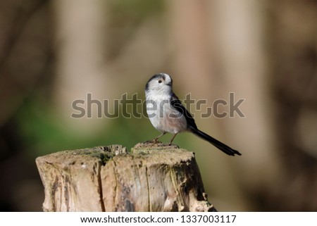 A long-tailed tit on a post #1337003117