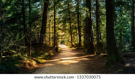 Forest in British Columbia with moody lights and colors.  A path leads through the warm summer park Royalty-Free Stock Photo #1337030075