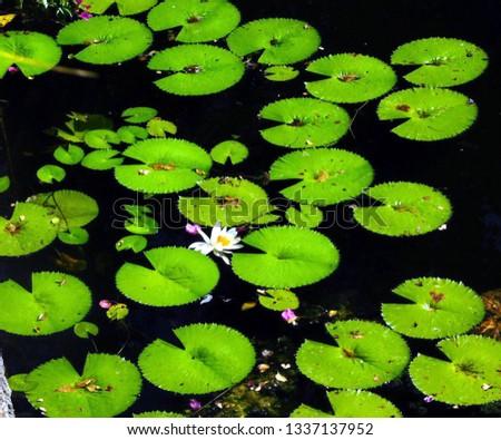 Lilly Pad Pond; Florida, October 2018 #1337137952