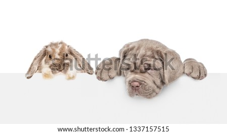 Dog and rabbit above empty white banner. isolated on white background. backdrop with empty space for text #1337157515