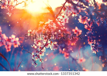 Spring flowers background #1337351342