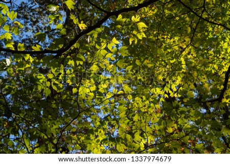 Image of forest and trees #1337974679