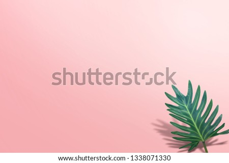 tropical palm leave on pink background #1338071330
