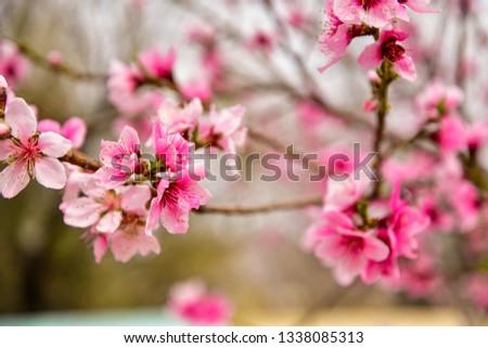cute pink flower #1338085313
