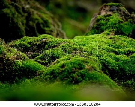 Beautiful green moss on the floor, moss closeup, macro. Beautiful background of moss for wallpaper. #1338510284