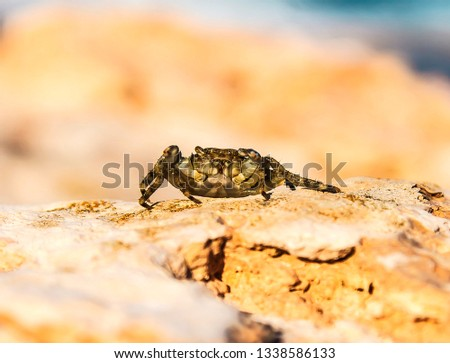 Sea crab on the rocks in nature #1338586133