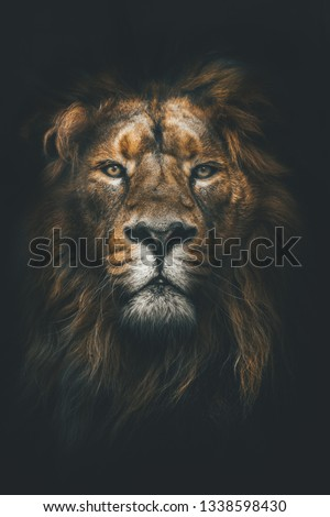 Portrait of a Beautiful lion, lion in dark #1338598430
